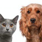 cane e gatto su sfondo bianco